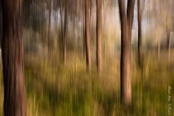 בנבכי היער